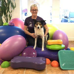 Grundkurs i balansbollsträning för hund (onlinekurs)