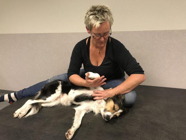 Massage hund