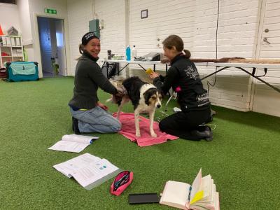 Certifierad Fysioterapeut på Hund
